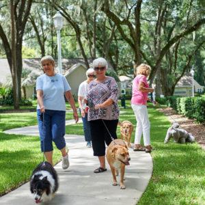 A groups of senior women walking their dogs
