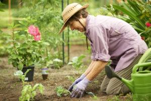 A senior woman gardening outdoors at the John Knox Village of Central Florida