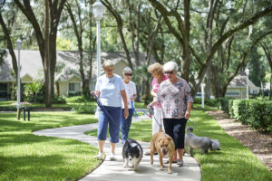 A group of senior women walking their dogs